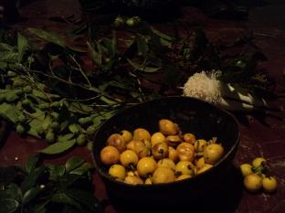 Bacuri vruchten en ander plantmateriaal - Foto Kees van Vliet 2012