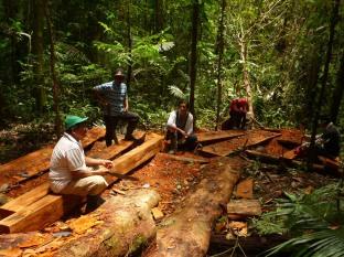 Veld excursie in het bos met abuelo Felisandro uit de gemeenschap Palmeras